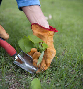 removing garden weeds and cleaning